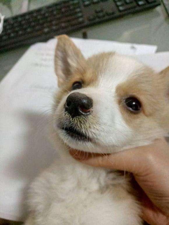 幼犬喂养方法和技巧