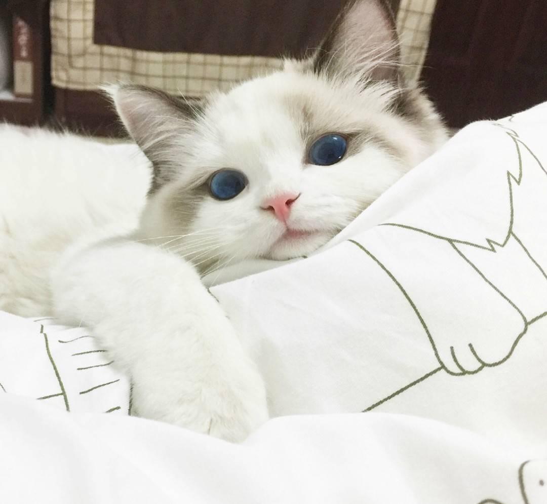 喵喵喵喵喵猫