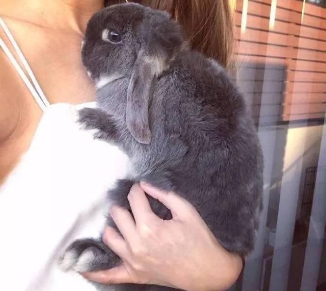 怎么抱兔子?这样抱才能让兔子爱上你的怀抱!