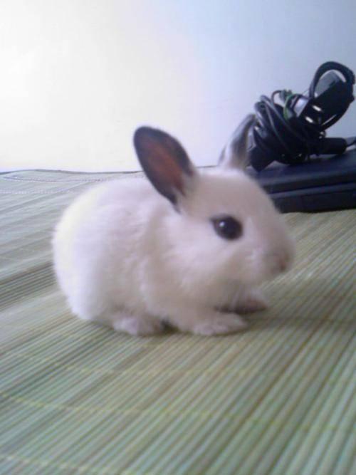 宠物兔子的智商高吗?