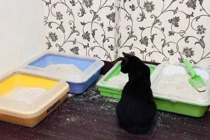 关于猫自发性膀胱炎,你可以这样交代铲屎官