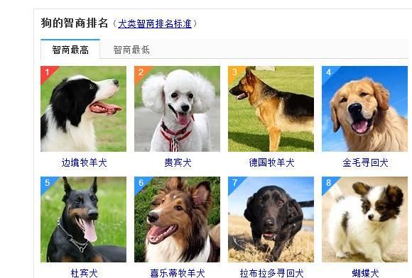 关于狗狗的智商,如果说度娘上的排名不靠谱,那应该怎样去判别呢