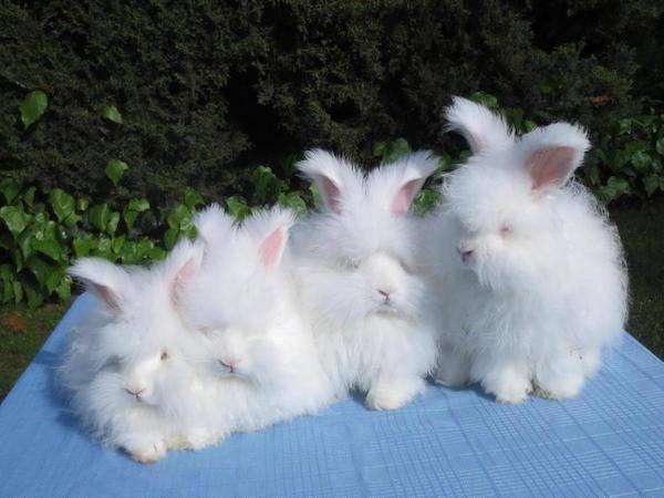 兔子会因为天冷而减少进食吗