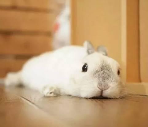 兔子也有尴尬期吗?