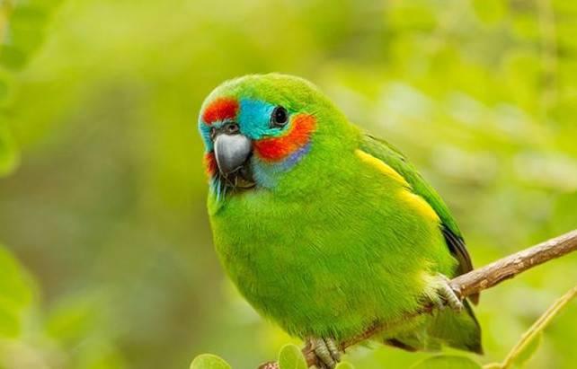 养鸟前您应当知晓的10种,养鹦鹉注意事项