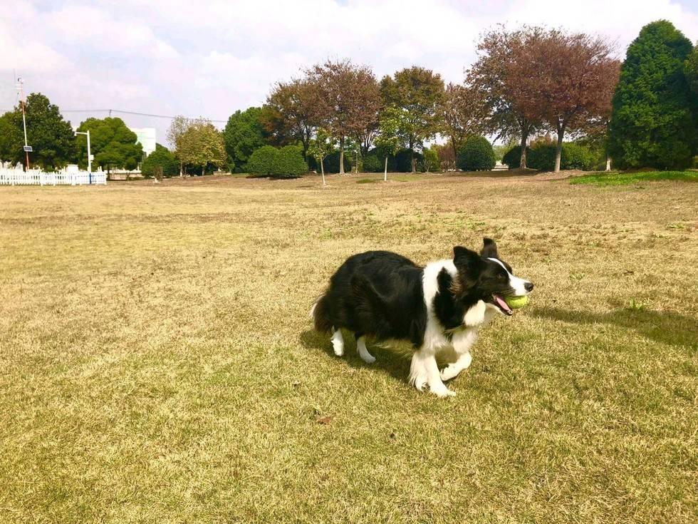 总算、总算见到太阳啦!小区绿地玩起来!~另外,喜欢打滚的那位~也翻滚起来吧!