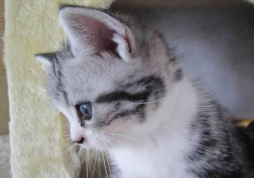 对猫过敏但是我想养猫,对猫过敏怎么办呢