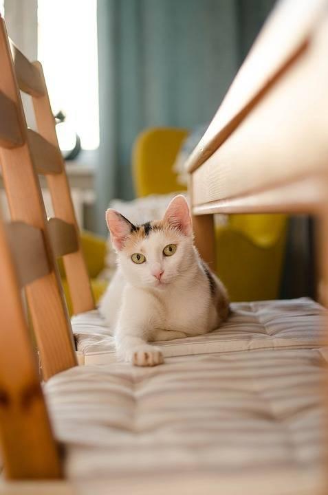 一只普通的猫