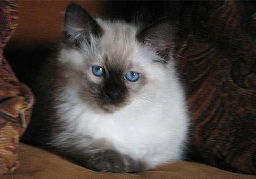 家养的猫咪不需要打疫苗?大错特错!