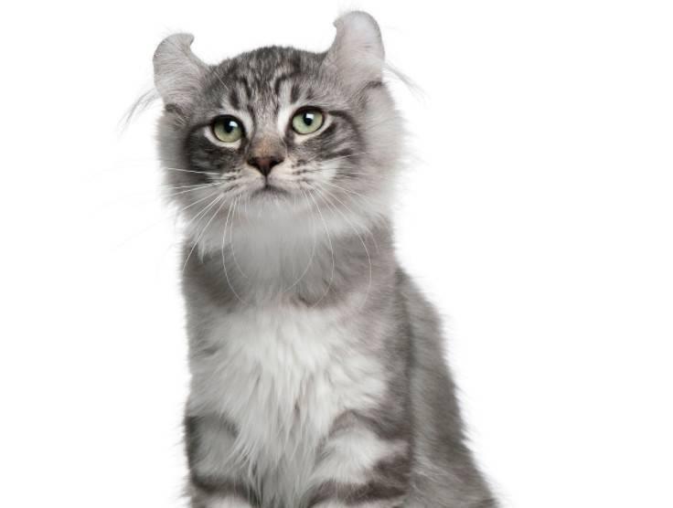 被猫咬了需要打疫苗吗?什么是十日观察法?
