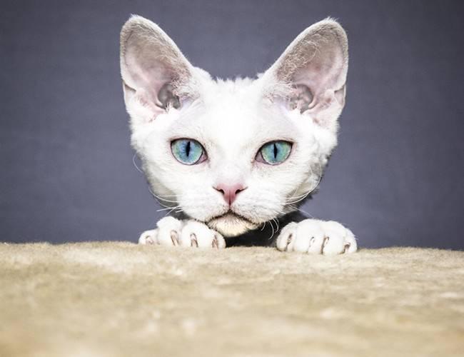 猫的语言与行为解读