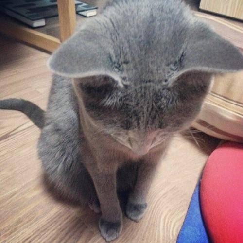 猫脱水症状?如何判断猫咪是否脱水