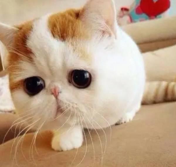 猫咪身上有白色皮屑