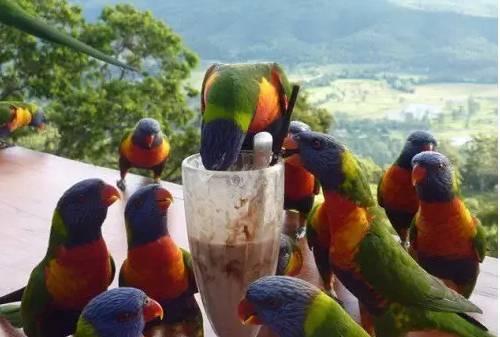 鹦鹉常见疾病与防治