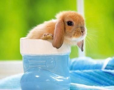 兔子绝育多少钱