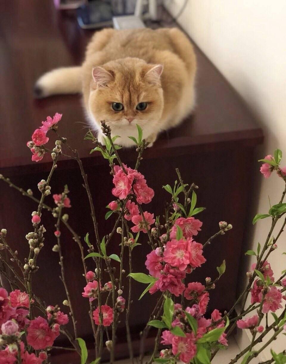 猫说在家也可以赏梅的