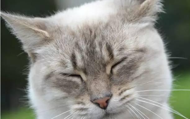 猫咪眨眼的次数为什么这么少?