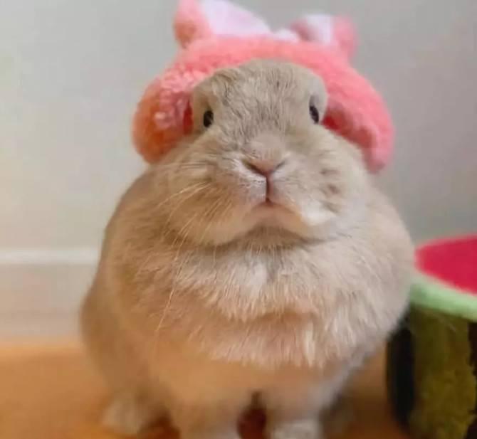 兔子生病的症状