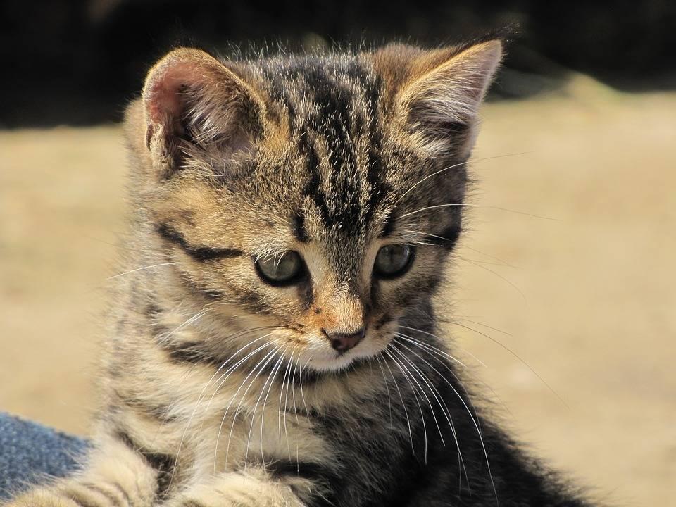 猫咪害怕的表现