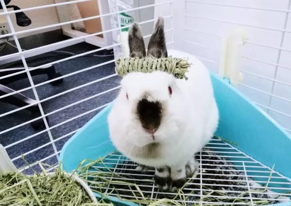 如何正确引导兔兔用厕所