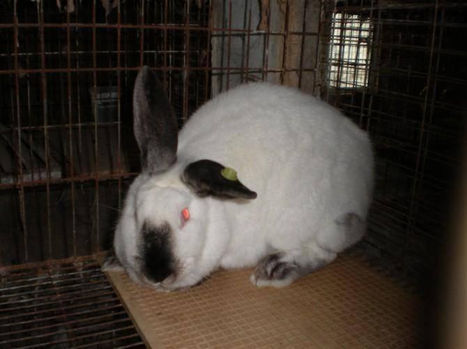 香烟对兔子有害吗?兔子能闻烟味吗?