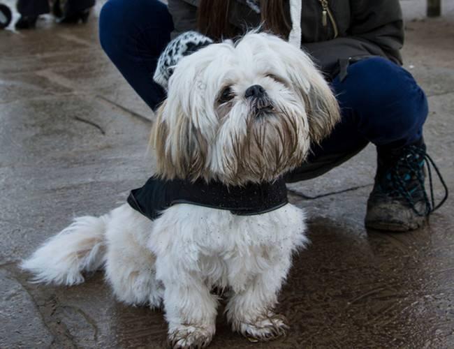 狗狗皮肤病超过160种,狗狗得皮肤病原因有那些?
