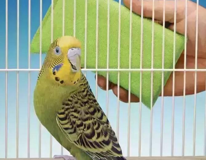 鸟笼怎么清洗?详解清洁鸟笼的具体步骤