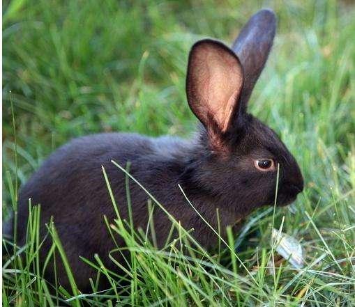 兔子不吃提草,只吃稻草垫子?
