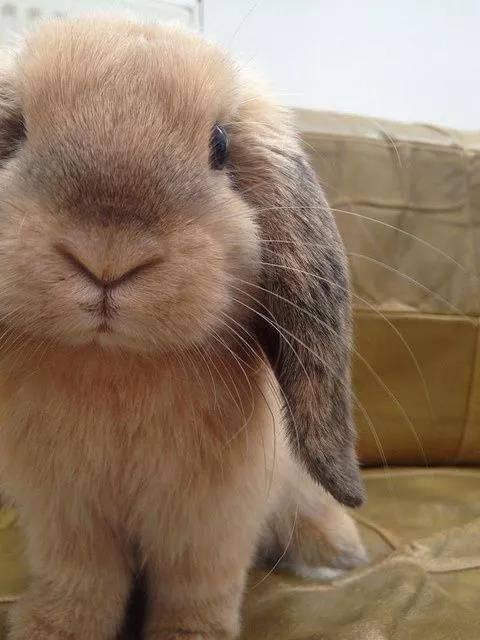 有人说兔子乱拉可以碰白醋,但你确定兔子不喜欢白醋吗?为什么我昨天刚买的白醋就用来喷了点在它们经常乱拉尿的地方,目的就想让它们不要再乱上厕所,结果它们居然跑过来舔一舔然后再喷还舔似乎感觉味道还不错????兔子可以吃白醋吗???