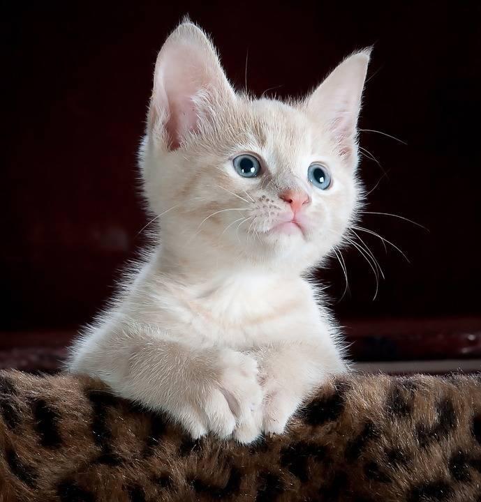 小小 猫 可爱