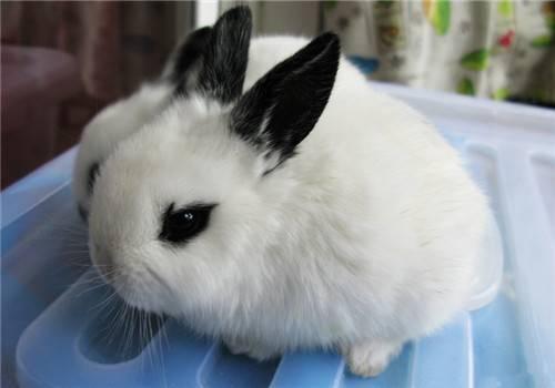 兔兔为什么要分笼