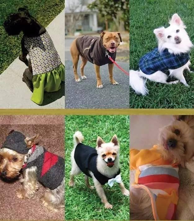 狗狗衣服制作过程图解