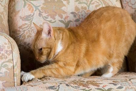 怎么防止猫抓沙发、抓家具