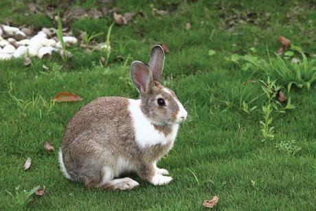 怎样给兔子量体温