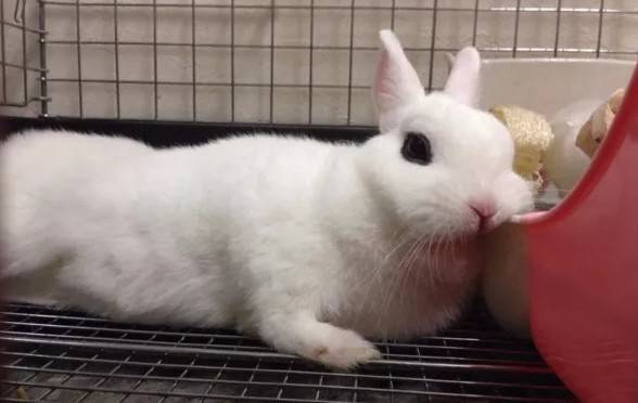 兔子为什么要吃兔粮