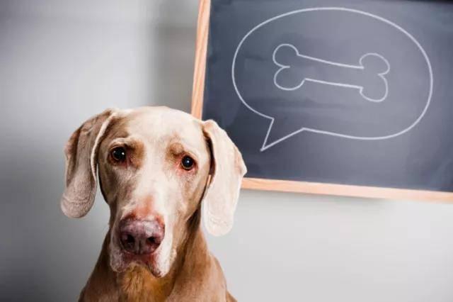 狗能吃骨头吗?吃骨头能消化吗