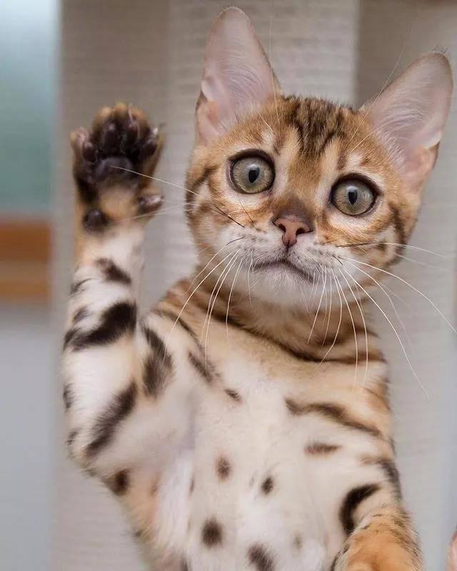 请最可爱的那位童鞋举下手!啊呀,是在叫我没错!