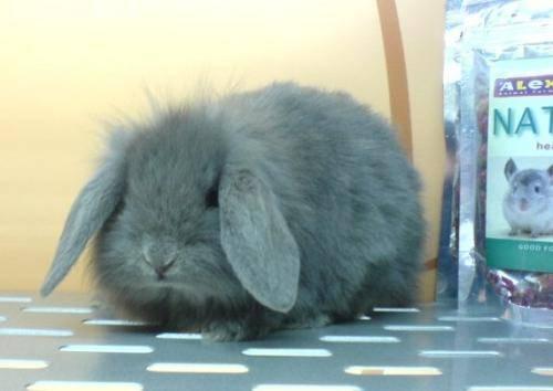 兔子讨厌被抱怎么办?