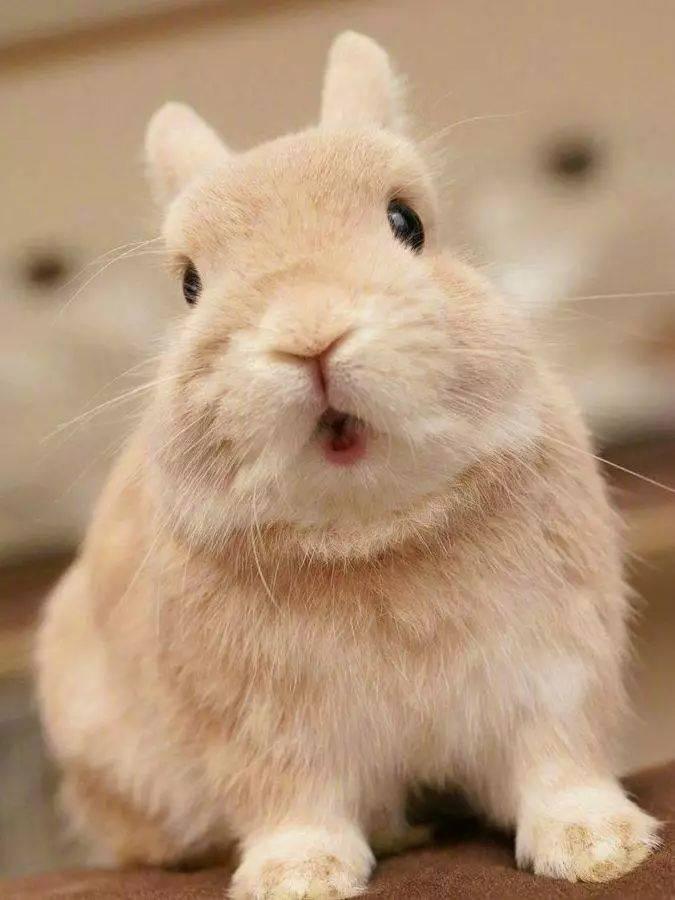 兔兔脱毛期需要注意哪些问题