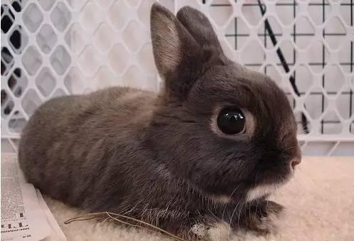 怎样帮助兔兔安度梅雨季