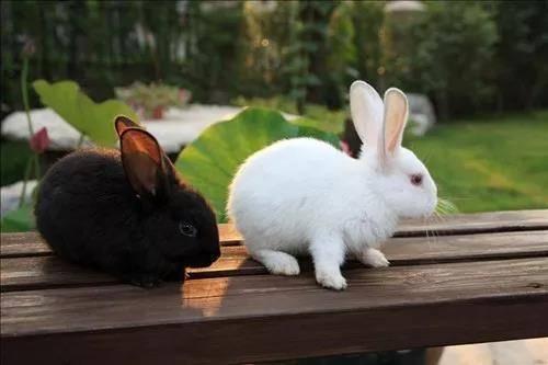 天热除了开空调,怎么给兔子有效降温的办法?