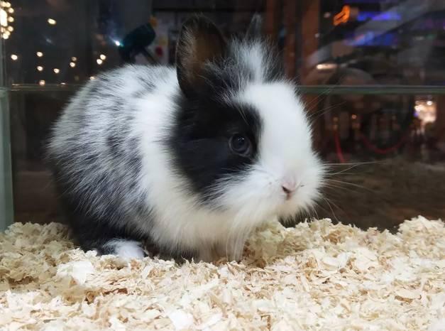 养兔子的人一定要注意了,家中的安全隐患都有哪些?