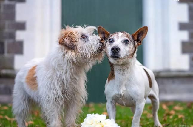 什么宠物狗最便宜?