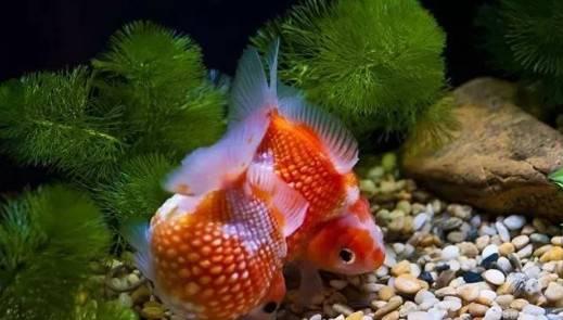 新买的鱼缸,怎么清洗才可以养鱼