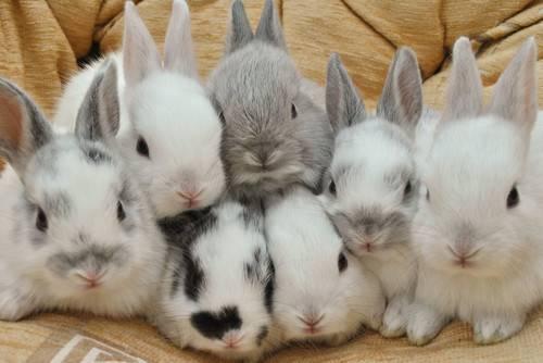 兔子饲养新手大全从如何挑、饮食、用品、繁殖