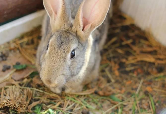 高龄兔子突然不愿意进食怎么办?
