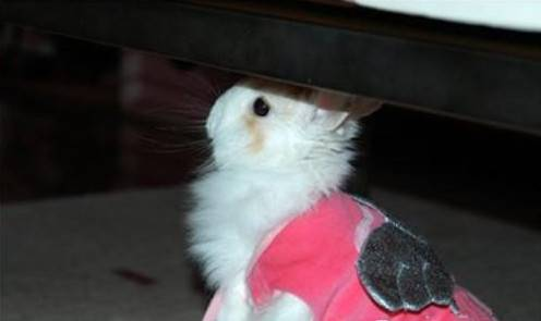 养兔子常见问题汇总