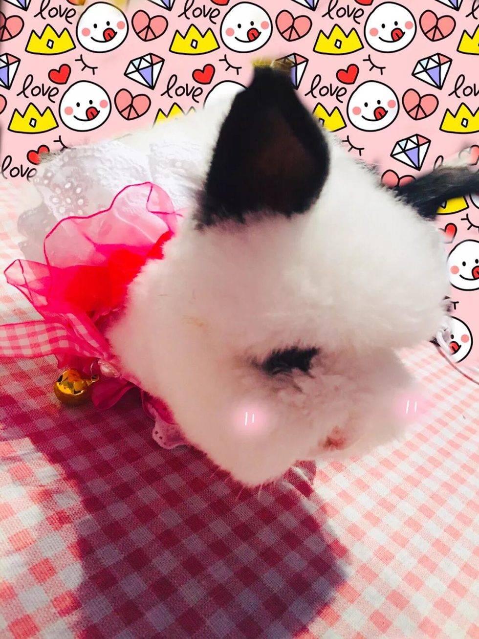 少女心的主人配了一只萌化少女心的兔子