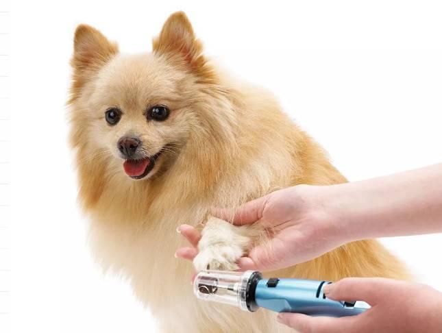 如何治疗狗狗破损的趾甲