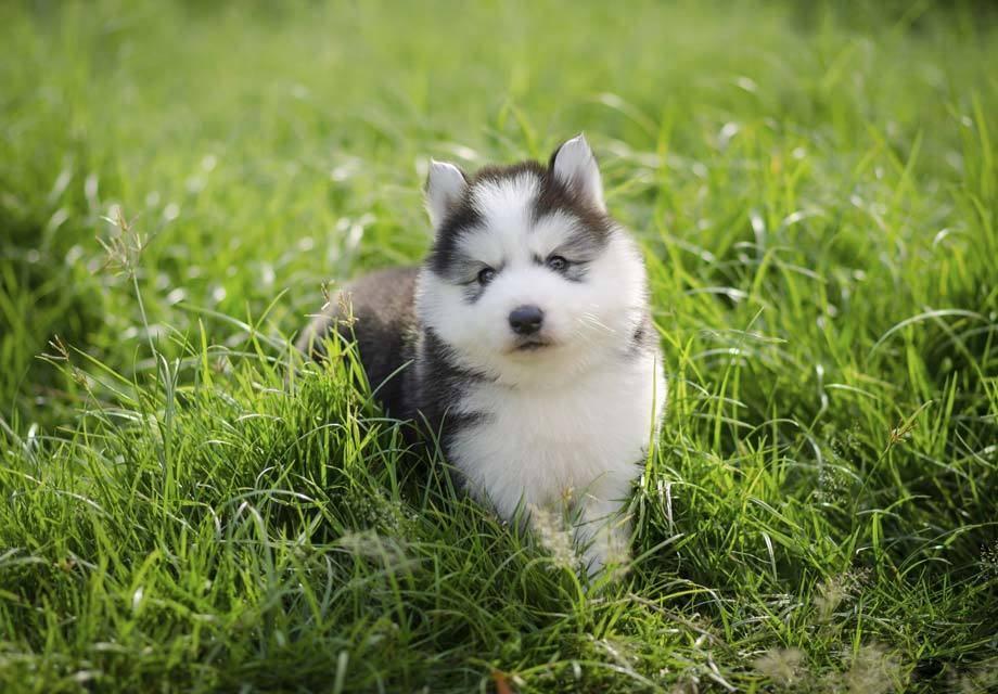 什么因素会影响狗狗的调教效果?